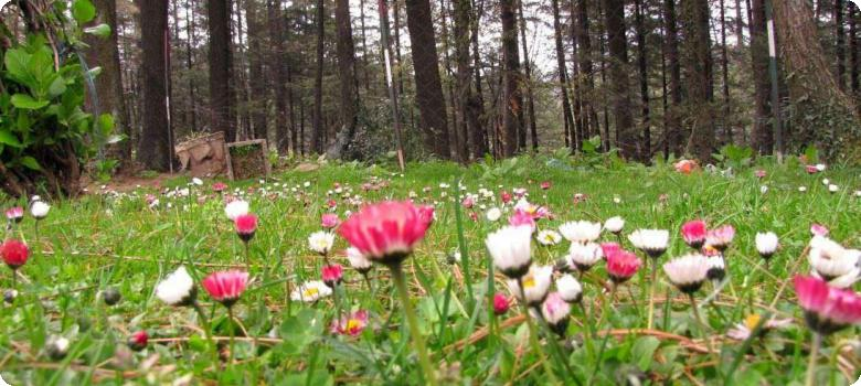 Flower bed at Patnitop