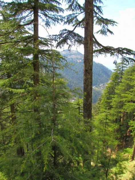 Kalatop through the trees