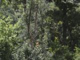 Narrow animal trail leaving the wide jungle path at Garu