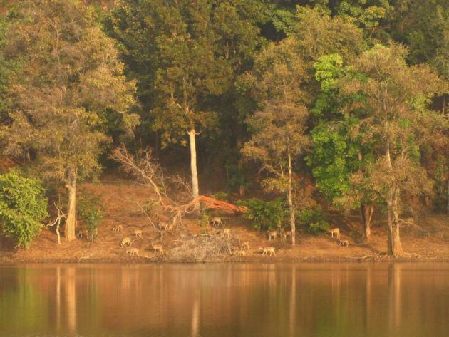 As if a dream, Nagzira forest, Gondia, Maharashtra
