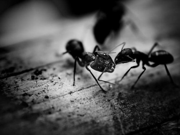 Ants wandering