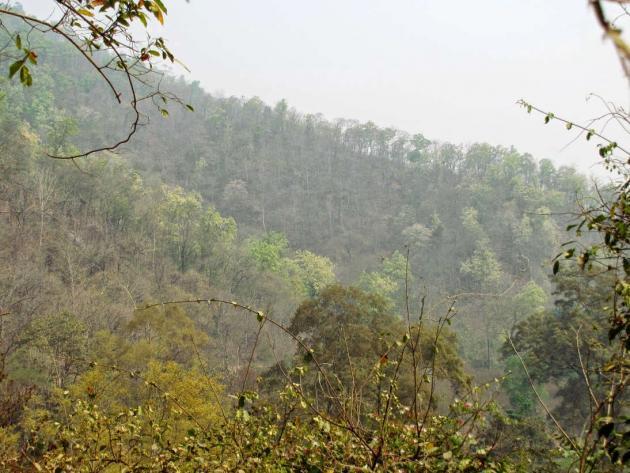 Green back hills