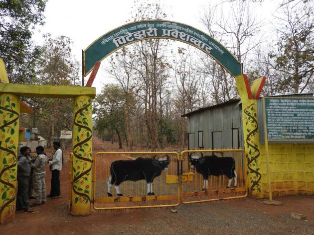 Imposing Pitezary gate about to open, Nagzira Tiger Reserve
