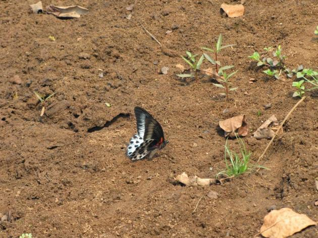 The butterfly landed on the scene