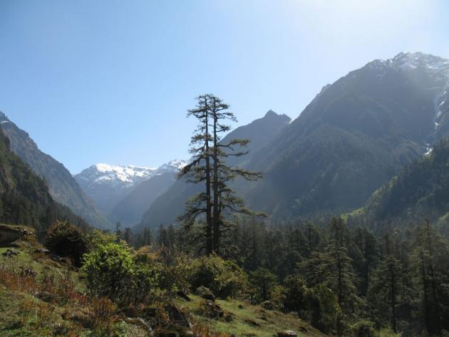Forests between Lachung and Yumthang