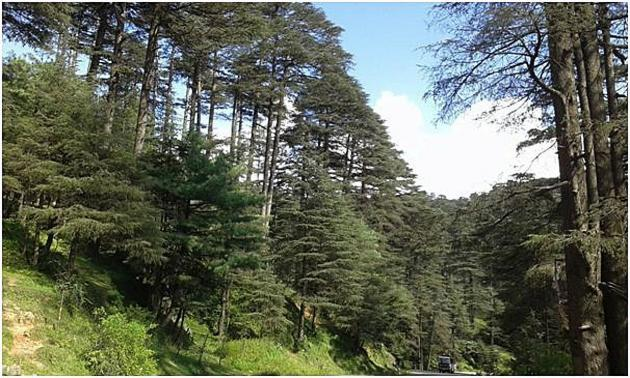 Wish to walk among the trees Patnitop